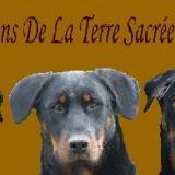 Photo de Beauceron de l'élevage Beaucerons De La Terre Sacrée De Marius