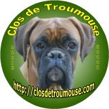 Photo de Boxer de l'élevage Du Clos de Troumouse