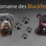 Photo de chiens de l'élevage Domaine des blackfeux