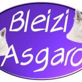Photo de Berger blanc suisse de l'élevage Bleizi Asgard