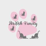 Photo de British Shorthair de l'élevage Cattery British Family