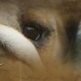 Photo de chiens de l'élevage Bulldog et carlin chez Dreamlander