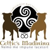 Photo de Staffordshire Bull Terrier de l'élevage De Celtic's Madinina