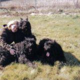 Photo de Bouvier des Flandres de l'élevage Le Bain du Roy