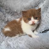 Photo de chats de l'élevage CHATTERIE THE CARESS OF LOVE'S