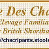 Photo de British Shorthair de l'élevage Chatterie DES CHACRIPANTS