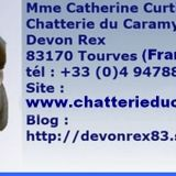Photo de Devon Rex de l'élevage CHATTERIE DU CARAMY
