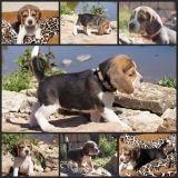 Photo de chiens de l'élevage Clos du Bonheur
