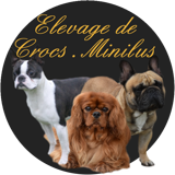 Photo de chiens de l'élevage Crocs Minilus