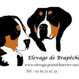 Photo de chiens de l'élevage De brapeche