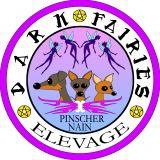 Photo de Pinscher de l'élevage Dark Fairies