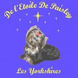 Photo de Yorkshire Terrier de l'élevage De l'etoile de Paisley