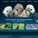 Photo de Bedlington Terrier de l'élevage De la source du diamant bleu