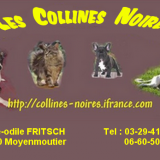Photo de Maine Coon de l'élevage Des Collines Noires