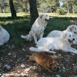Photo de chiens de l'élevage Des Grands Seigneurs Des Baux