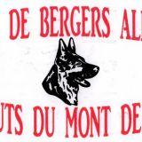 Photo de Berger allemand de l'élevage DES HAUTS DU MONT DE PLASNE