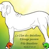 Photo de Fila brasileiro de l'élevage Le clan des Brésiliens