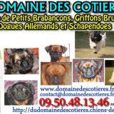Photo de chiens de l'élevage DOMAINE DES COTIERES
