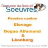 Photo de Leonberger de l'élevage Domaine du Bois de Soeuvres