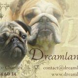 Photo de chiens de l'élevage Dreamlander