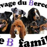 Photo de Basset Hound de l'élevage Du-berceau-de-b-family
