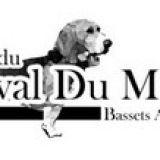 Photo de Basset artésien normand de l'élevage DU CHEVAL DU MARQUET