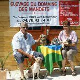 Photo de chiens de l'élevage DU DOMAINE DES MANDETS