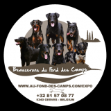 Photo de Beauceron de l'élevage Du Fond des Camps