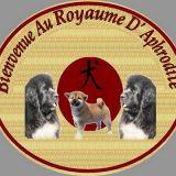 Photo de chiens de l'élevage Du Royaume d' Aphrodite