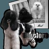 Photo de chiens de l'élevage Cybèle des Can'Tzu