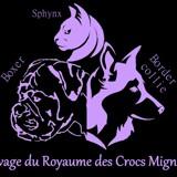 Photo de chiens de l'élevage DU ROYAUME DES CROCS MIGNONS