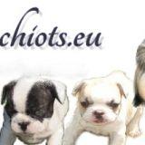 Photo de chiens de l'élevage Elevage chiens d'aquitaine