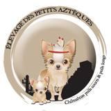 Photo de Chihuahua de l'élevage DES PETITS AZTEQUES