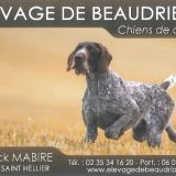 Photo de chiens de l'élevage Elevage de Beaudribos