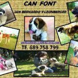 Photo de chiens de l'élevage Elevage de Can Font