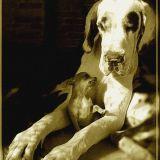Photo de chiens de l'élevage Elevage de Misandre