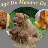 Photo de chiens de l'élevage Elevage du Masque de Seth