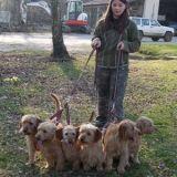 Photo de chiens de l'élevage Elevage du Sentier des Bigues