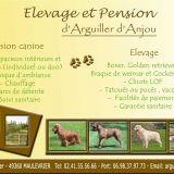 Photo de chiens de l'élevage Elevage et pension d'Arguiller d'Anjou