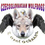 Photo de chiens de l'élevage Elevage z Orel Ochrana