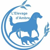 Photo de chats de l'élevage L'ELEVAGE D'AMBRE