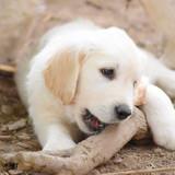 Photo de chiens de l'élevage Wonder Of Art