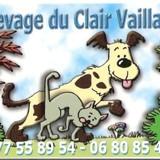 Photo de chiens de l'élevage ELEVAGE DU CLAIR VAILLANT