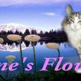 Photo de Norvégien de l'élevage Feline's Flowers