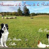 Photo de chiens de l'élevage Ferme de la Rodde