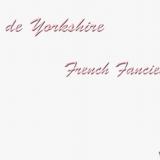Photo de Yorkshire Terrier de l'élevage French Fancies