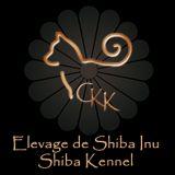 Photo de Shiba Inu de l'élevage Go Chuken Kiku Kensha