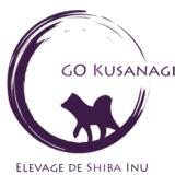 Photo de Shiba Inu de l'élevage Go Kusanagi