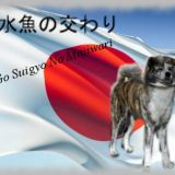 Photo de Akita Inu de l'élevage Go Suigyo No Majiwari