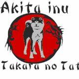 Photo de Akita Inu de l'élevage Go takara no Tatsu